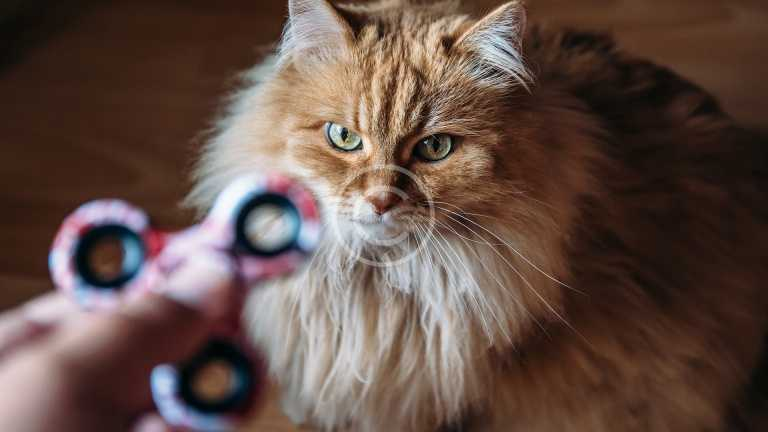 Even Cats Hate Fidget Spinners